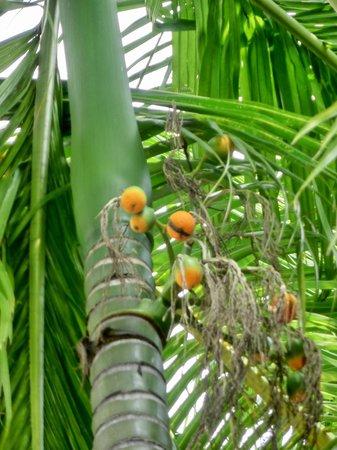 Sari Pan Pacific Jakarta: Trees at the Pool