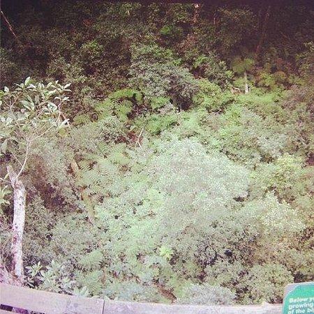 Tsitsikamma Canopy Tours : Forest floor
