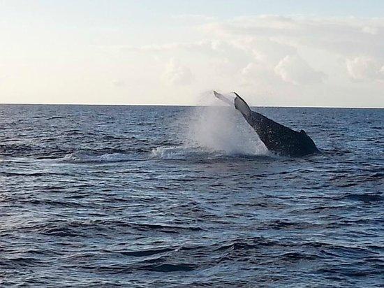 Les Balades de Keila : whales in Deshaies ( aboard Keila)