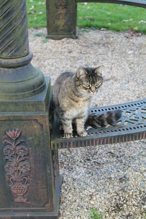 Beechfield House: 'Oh to be a Cat living in Beechfield