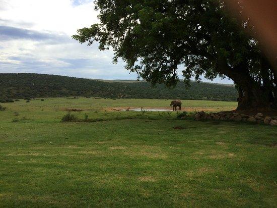 Gorah Elephant Camp: vue de la terrasse