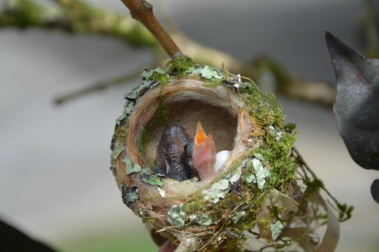 Agua Inn: Hummingbird nest