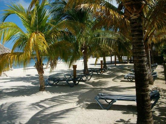 Turquoise Bay Dive & Beach Resort: shady retreat