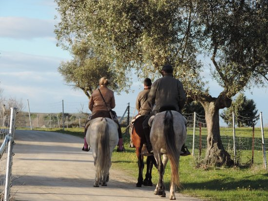 Activities Barbancho - Horseback Riding