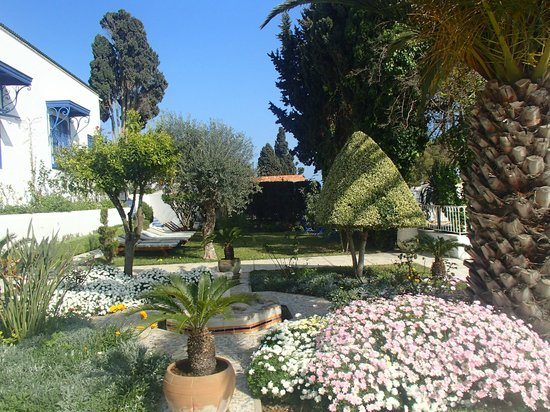 Hotel  Sidi Bou Said : The garden