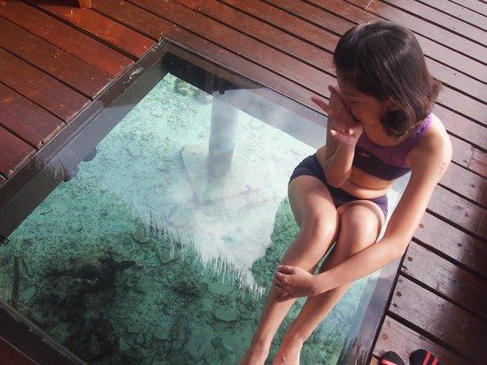 Adaaran Prestige Water Villas: portal glass window in 'backyard'