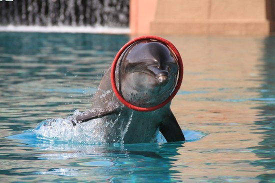 Dolphin Bay: Playing with Dolphins