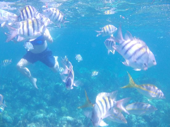 Bahama Boat Tours: Take an underwater camera!!!!