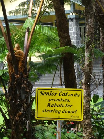 Kilauea Lodge: Even the cat is well cared for