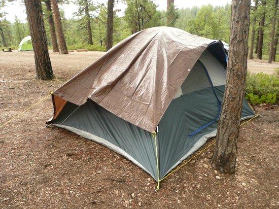 North Campground: Camping zwischen den Bäumen