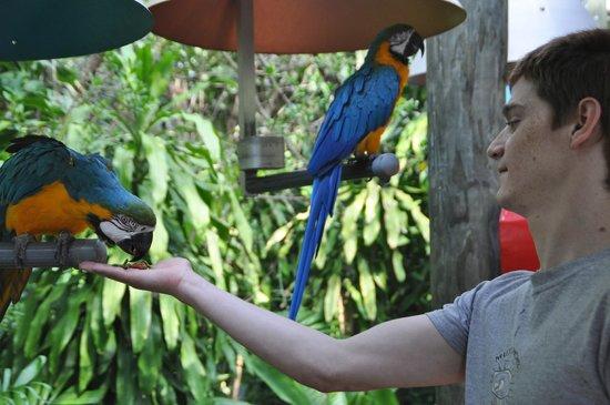Jungle Island: feeding the parrots