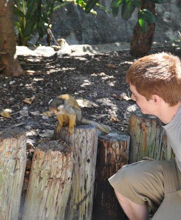 Jungle Island: Manu encounter