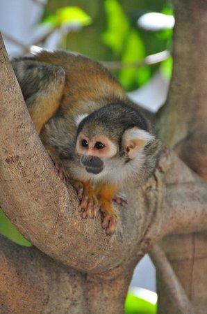Jungle Island: Manu inside the enclosure