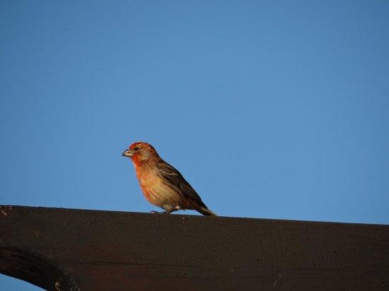 Pueblo Bonito Sunset Beach: Birding