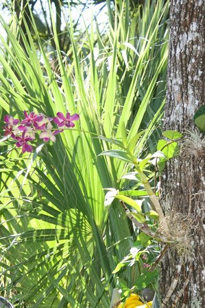 Naples RV Resort: Even orchids grow.