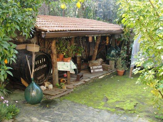 Residence Casale Nunziatina : Casale Nunziatina Garden
