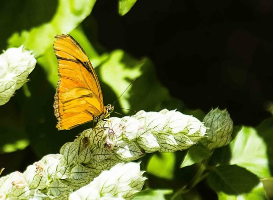 Isla Verde Hotel: Butterfly, view from patio