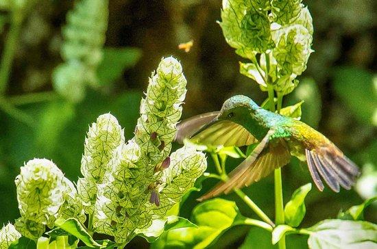 Isla Verde Hotel: Hummingbird, view from patio