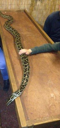 The Reptile Experience: smaller python