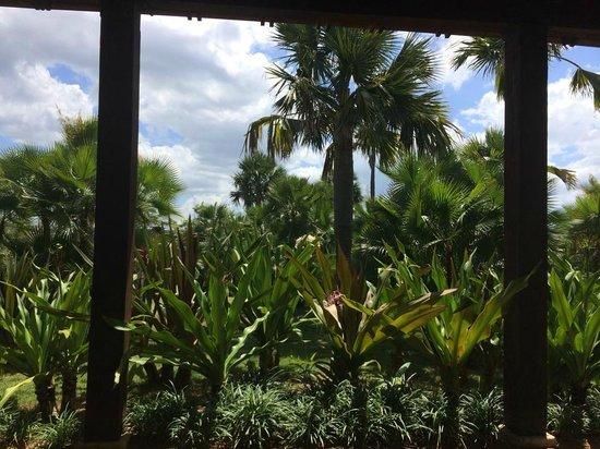 Royal Isabela : beauty everywhere