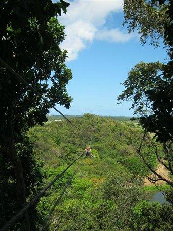 Campo Rico Ziplining Adventure : Halfway down one of the ziplines
