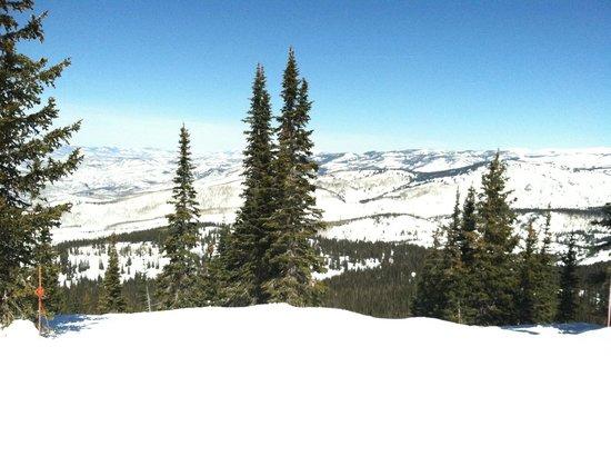 Steamboat Ski Resort: Lots of glade skiing