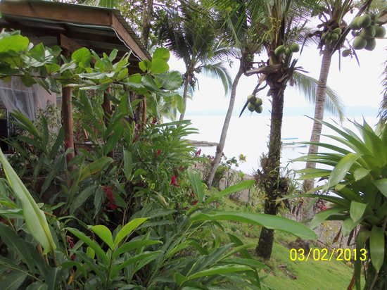 Cabinas Jimenez: Tropical Views