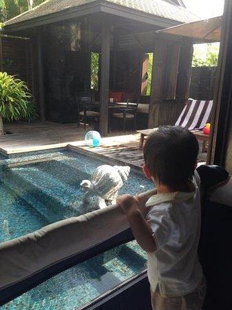 Anantara Mai Khao Phuket Villas: pool view baby crib