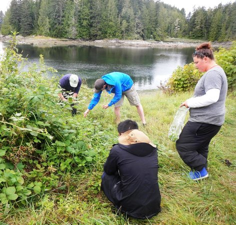 Discovery Expeditions Day Tours : Berry and spearmint picking