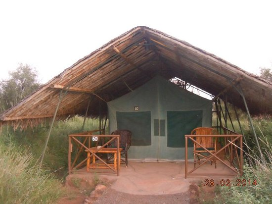 Kibo Safari Camp : tent