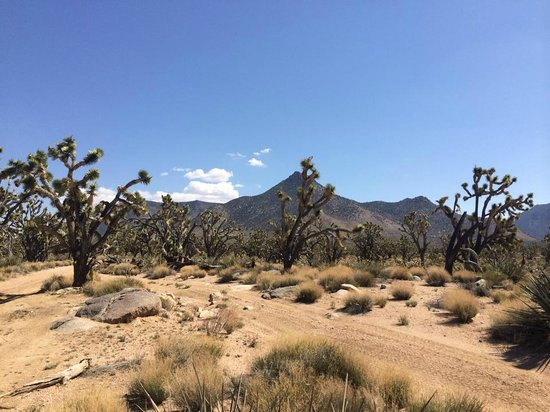 Bighorn Hummer Tours : Joshua Trees, offroad.