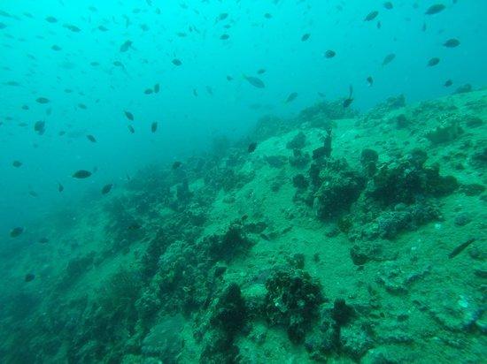 Discovery Dive Centre: Ko Tao