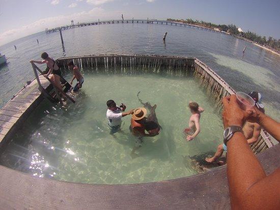 Samba Catamarans: requins