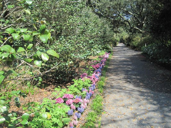Bellingrath Gardens and Home : PATH TO THE MANSION
