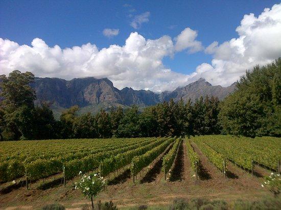 Redwood Private Tours : Thelema Vineyards Stellenbosch