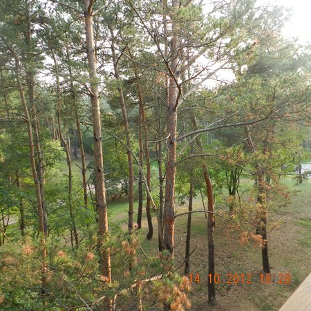 Erdospuszta Club Hotel: Woods view from our room