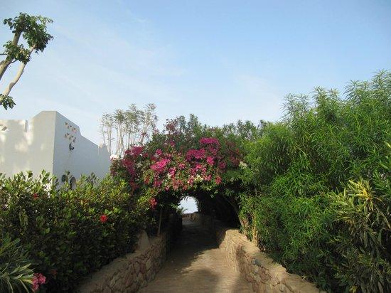 Domina Hotel & Resort Harem: Дорога на пляж отеля Гарем