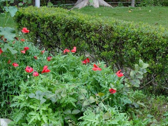 Hotel Clarks Shiraz: the gardens