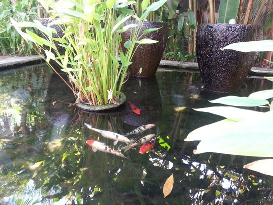 Kuta Seaview Boutique Resort & Spa : Lovely pond in the hotel complex