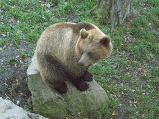 Musée de plein air de Skansen : Skansen Bear