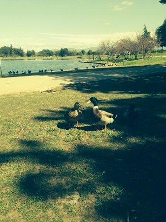 Lake Balboa Park : Lake Balboa residents