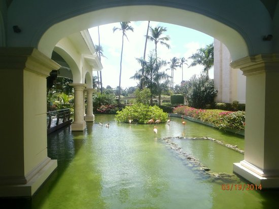 Iberostar Grand Hotel Bavaro: lobby with flamingos
