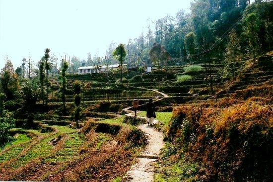 Bara Mangwa Farmhouse: On the trek to BaraMangwa Farm house