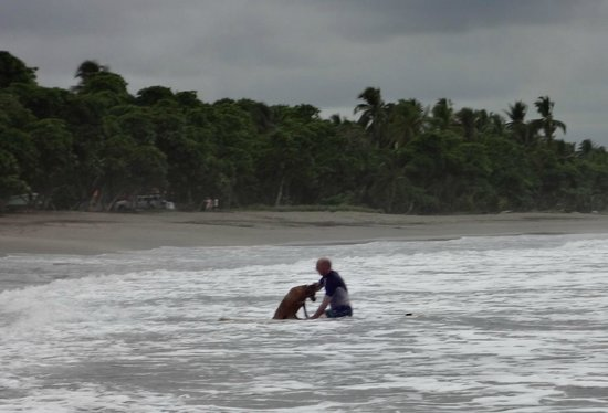 Daystar Bahia Azul: Surfing with my dog