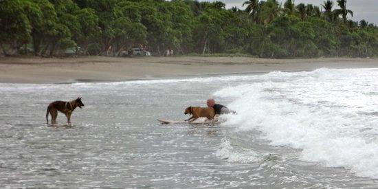 Daystar Bahia Azul : Surfing with my dog