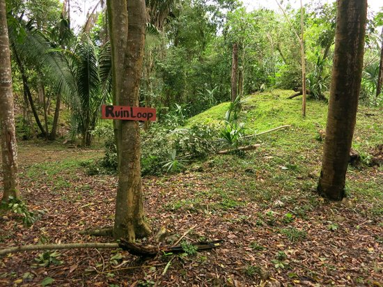 Lower Dover Field Station & Jungle Lodge : Maya runis