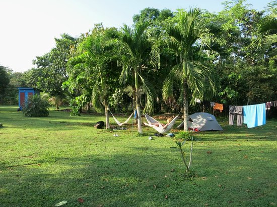 Lower Dover Field Station & Jungle Lodge : Campground