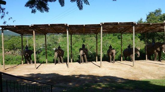 Elephant Whispers: Il momento delle presentazioni