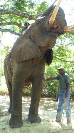 Elephant Whispers: incontri ravvicinati