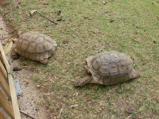 THB Tropical Island: TORTUGAS